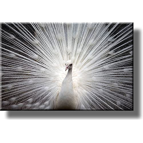 White Peacock Picture On Stretched Canvas Wall Art Décor Ready To Hang Buy Products Online With Ubuy Lebanon In Affordable Prices B00sesdypi