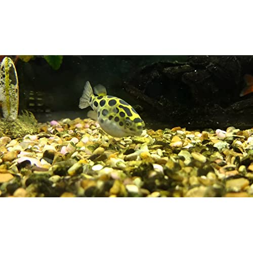 Ubuy Lebanon Online Shopping For Fish Aquatic Pets In Affordable Prices
